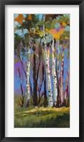 Framed Birch Trees