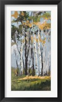 Framed Golden Birch Trees