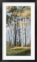 Framed Golden Birch Trees