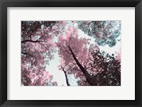 Framed Blooming Cherry Blossom