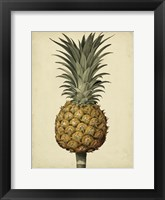 Framed Brookshaw Antique Pineapple II