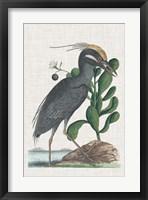 Framed Catesby Heron I