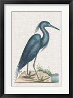 Framed Catesby Heron II