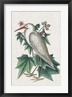 Framed Catesby Heron III