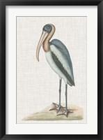 Framed Catesby Heron IV
