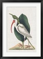 Framed Catesby Heron VI