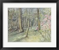 Framed Virginia Woods I