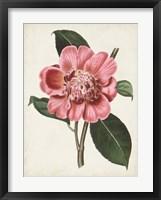 Framed Carnelian Blooms I