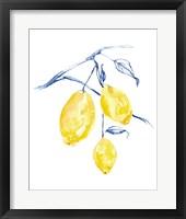 Framed Watercolor Lemons I