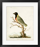 Framed Capital Tanager