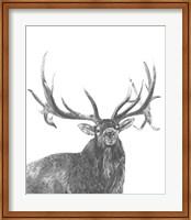 Framed Wildlife Snapshot: Elk