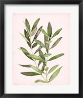 Framed Soft Pink Leaves II