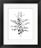 Framed Paynes Grey Botanicals II