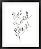 Framed Paynes Grey Botanicals IV