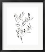 Framed Paynes Grey Botanicals IV