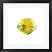 Framed Discus Fish I