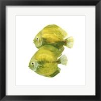 Framed Discus Fish II