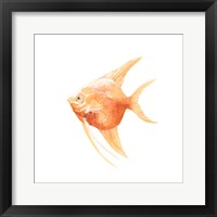 Framed Discus Fish III