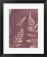 Framed Botanical Sun I
