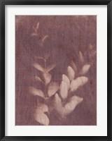 Framed Botanical Sun II
