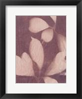 Framed Botanical Sun III