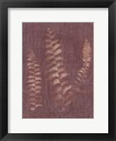 Framed Botanical Sun IV