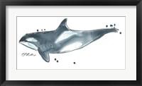 Framed Cetacea Orca Whale