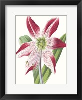 Framed Floral Beauty II