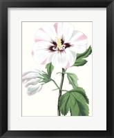 Framed Floral Beauty III