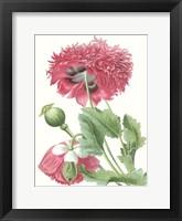Framed Floral Beauty V