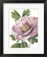 Framed Floral Beauty VI