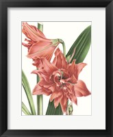 Framed Floral Beauty VII