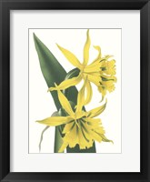 Framed Floral Beauty VIII