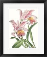 Framed Floral Beauty IX