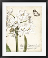 Framed Narcissus Botanique I