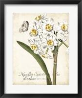 Framed Narcissus Botanique II