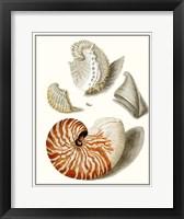 Framed Collected Shells I