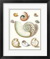 Framed Collected Shells II