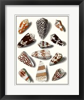 Collected Shells V Framed Print