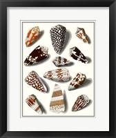 Framed Collected Shells V
