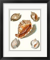 Collected Shells VII Framed Print