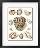 Framed Collected Shells VIII