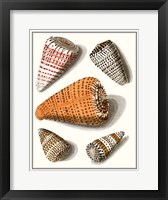 Framed Collected Shells IX