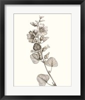 Neutral Botanical Study I Framed Print