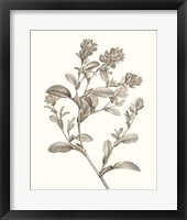 Framed Neutral Botanical Study II