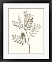 Neutral Botanical Study III Framed Print