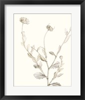 Neutral Botanical Study IV Framed Print