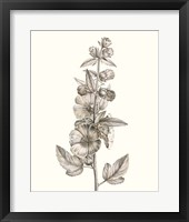 Neutral Botanical Study V Framed Print
