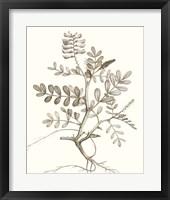 Framed Neutral Botanical Study VI