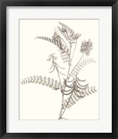 Neutral Botanical Study VII Framed Print